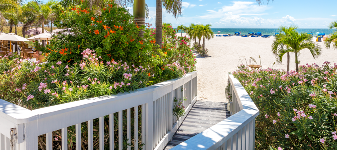 A boardwalk surrounded by colorful plants leading into a beautiful sandy beach.